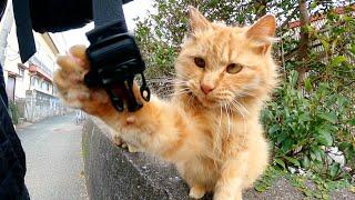 猫島の路地で老猫をモフっていたら、無邪気なチビ猫も寄って来た