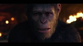 """Киноперсона """"Планета обезьян: Война"""""""