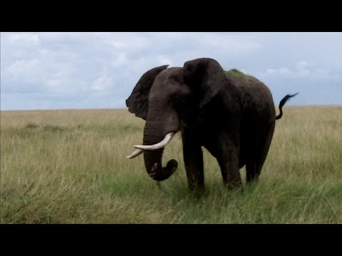Journey to Africa - Day 2 - Welcome to the Masai Mara