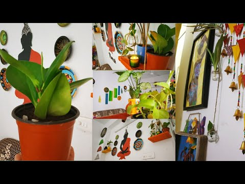 Cool and Easy Home Decor Ideas with Indoor Plants   zero investment Decor guide ( Rental Friendly )