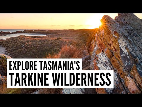 Explore Tasmania's Tarkine wilderness - The Big Bus tour and