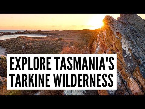 Explore Tasmania's Tarkine wilderness - The Big Bus tour and travel guide