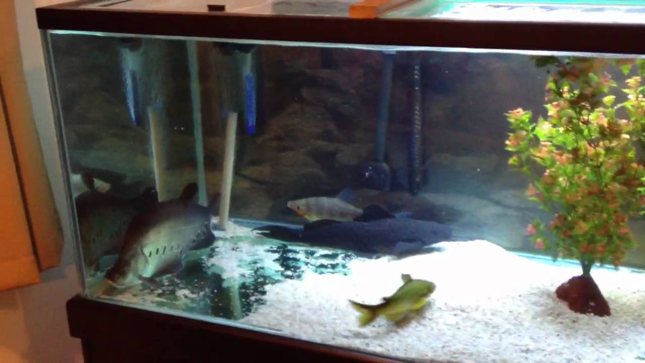 Monster fish tank 300 gallon huge full grown 25 clown for 300 gallon fish tank