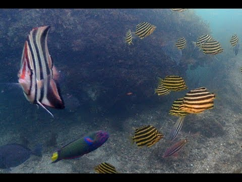 Carnival of the Fishes