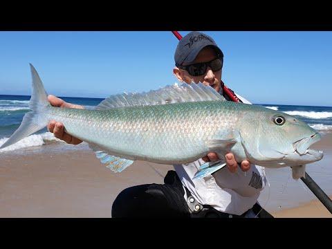 Surf Fishing For Green Job Fish
