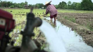 Rice Farmers Frustrated As Drought Grips Thailand