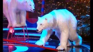 Circus Roncalli - Eisbärennummer 2015