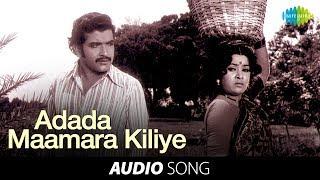 Chittu Kuruvi | Adada Maamara Kiliye song | Sivakumar, Sumithra | Ilaiyaraja