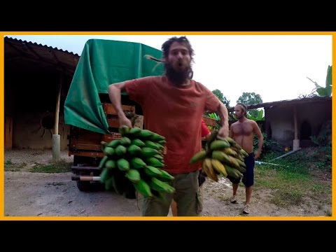 BANANA DELIVERY: COSTA RICA FRUIT DIRECTLY FROM THE FARMER