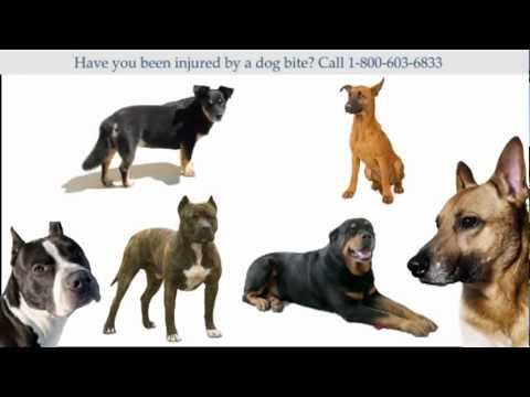 Wyoming Dog Bite Lawyer (800) 603-6833 Assistance and Advice