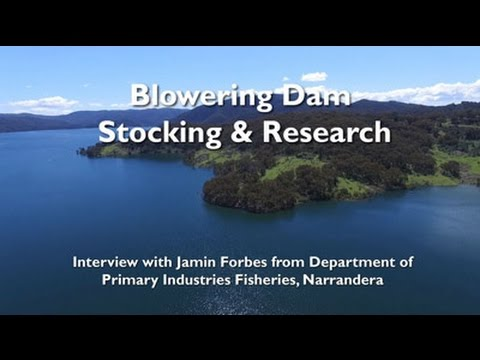 Year Round Cod Fishing in Blowering Dam - A Possibility!