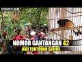 Murai Batu Borneo No  Jadi Tontonan Serius  Mp3 - Mp4 Download