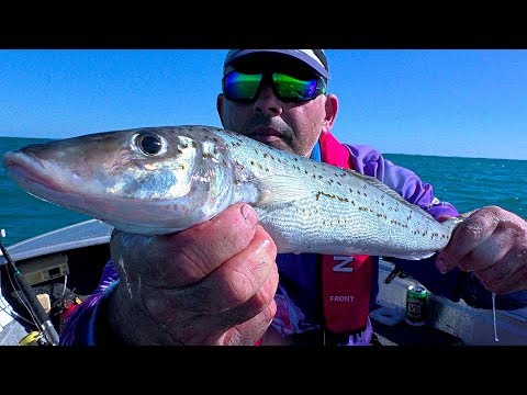 AWESOME BIG JUICY KG WHITING & TIGER FLATHEAD FISHING Hillarys Perth W.A