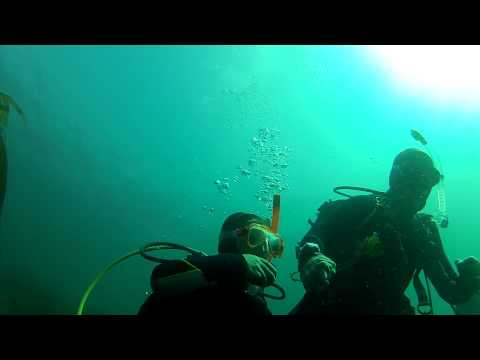 Our Scuba Trips | Kids can dive too!
