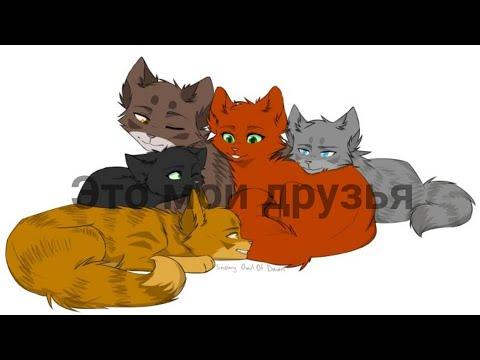 •Коты-воители• {клип} ????Это мои друзья ????