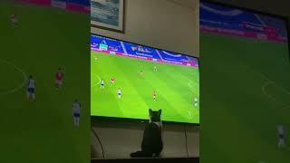Cat Swats Soccer Player on TV #shorts