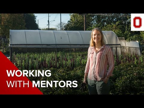 The student experience: Working with mentors