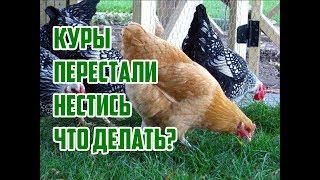 Почему куры не несутся? / Что делать если куры перестали нестись? / Почему куры перестали нести яйца