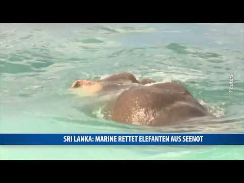 Sri Lanka: Marine rettet Elefanten aus Seenot