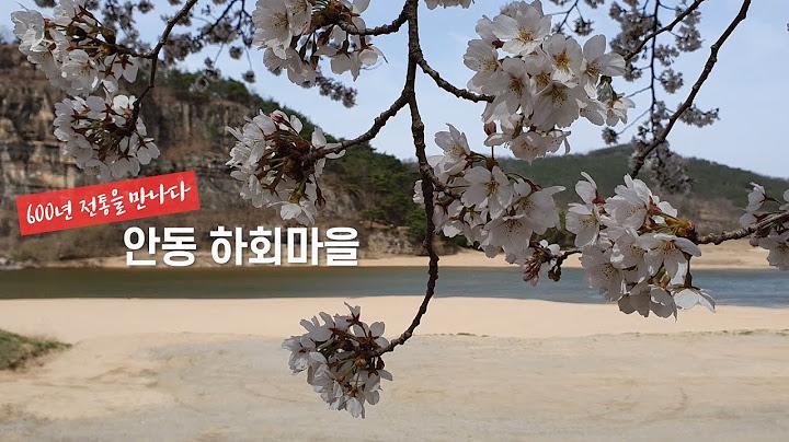 600년 전통을 만나다 안동 하회마을(하회별신굿과 충효당, 부용대 벚꽃)
