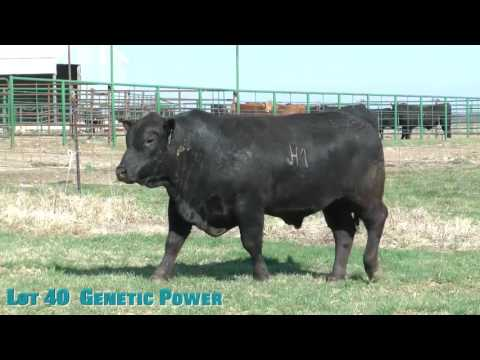 Lot 40  Genetic Power