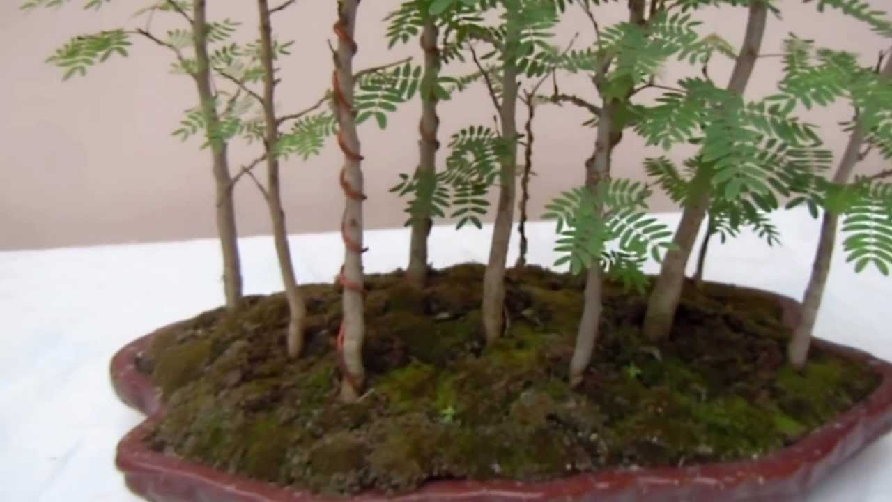 Bosques en miniatura 1 parte youtube for Arboles altos para jardin
