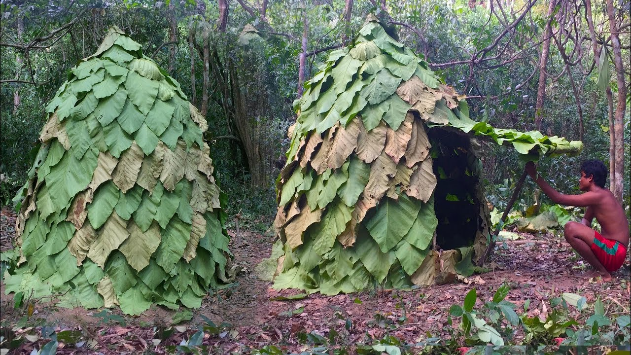 Secret Of Primitive: Building House By Using Leaves