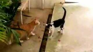 Operation infiltration cat vol.10