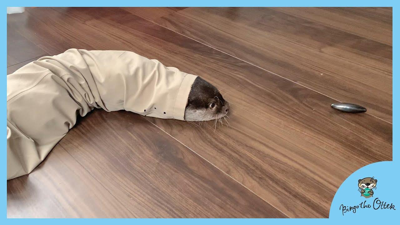 パパのズボンが好きすぎるカワウソのビンゴとベル|Otter Bingo&Belle new blanket - daddy's stinky pants