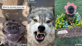 What people think about DOG vs What actually looks like | expectation vs reality | TikTok