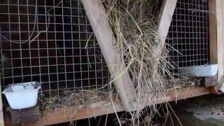 Уличное содержание кроликов круглый год(Кролик на мясо и на племя - 89106625129, Ярославская обл., город Углич., 2016-01-31T13:02:21.000Z)