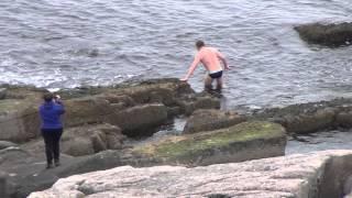видео Что омывает Гоа море или океан