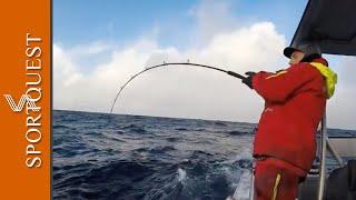 Skrei Cod Fishing Havoysund