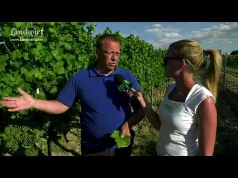 Top Düngung im Weinbau - YouTube #LR_15
