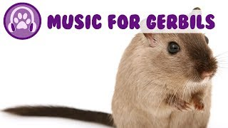 Music for Gerbils! Calm my Gerbil, Pet Therapy Music 2019
