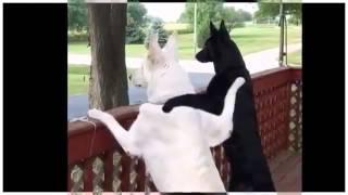 クスっと笑える動物のおもしろ映像を集めました。 説明. チャンネル登録...
