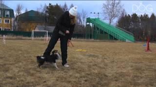 Fashion Dog TV - Дрессировка собак - Трюковая дрессура - Аджилити