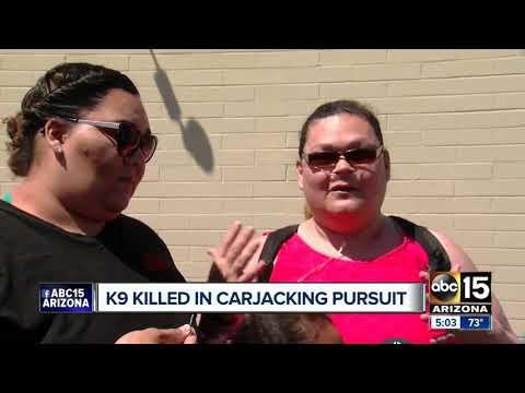 Phoenix carjacking suspect taken into custody, police K-9 killed