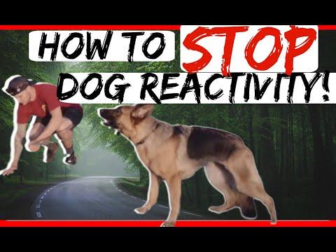 Reactive German Shepherd- How to train reactive aggressive German Shepherd
