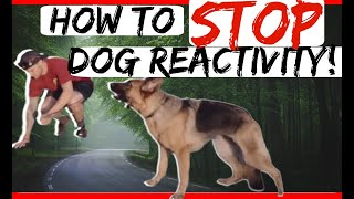 Reactive German Shepherd How to train reactive aggressive German Shepherd