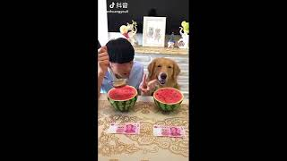 Cute Dogs and Cats Doing Funny Things 2018 😄😁😜 Funny Animals Videos #1