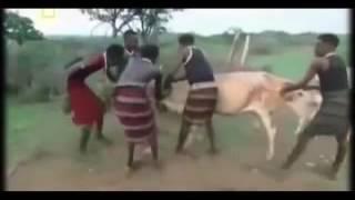 Секс в дикой Африке Жизнь племени Водаабе (часть первая)