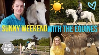 Vlog | Sunny Weekend with the Equines | Gridwork + Dressage | This Esme