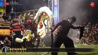 Perang Celeng 1000 Kreasi MAYANGKORO ORIGINAL Live TOSAREN 2019