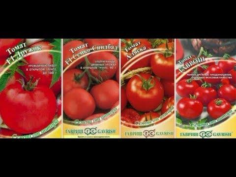Помидоры для ЛЕНИВЫХ , Безрассадные и  Рассадой . Сорта | ультраскороспелые | неприхотливые | скороспелых | скороспелые | помидоры | ленивых | томаты | сорта | помил | для