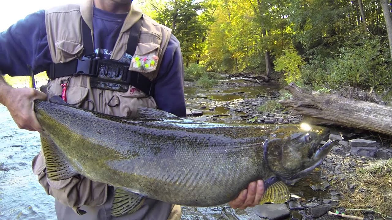 Salmon river pulaski ny flyfishing gopro youtube for Salmon river ny fishing