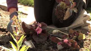 How Far Apart Do You Plant Begonias? : More Gardening Advice