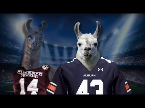 The Feed: What If Llamas Got Loose On The Gridiron? | CampusInsiders
