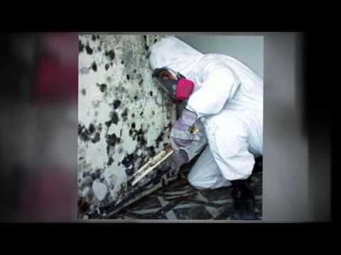Mold Remediation Stafford Va