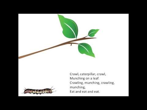 The Butterfly Cycle Poem With Music Youtube